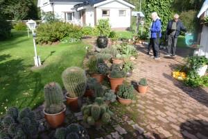 Kaktuspiha Asikkalan kirkonkylässä, jossa oli useita uusia etäkohteita.